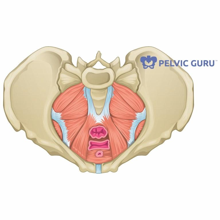 Pelvic Pain During Menopause - Dr