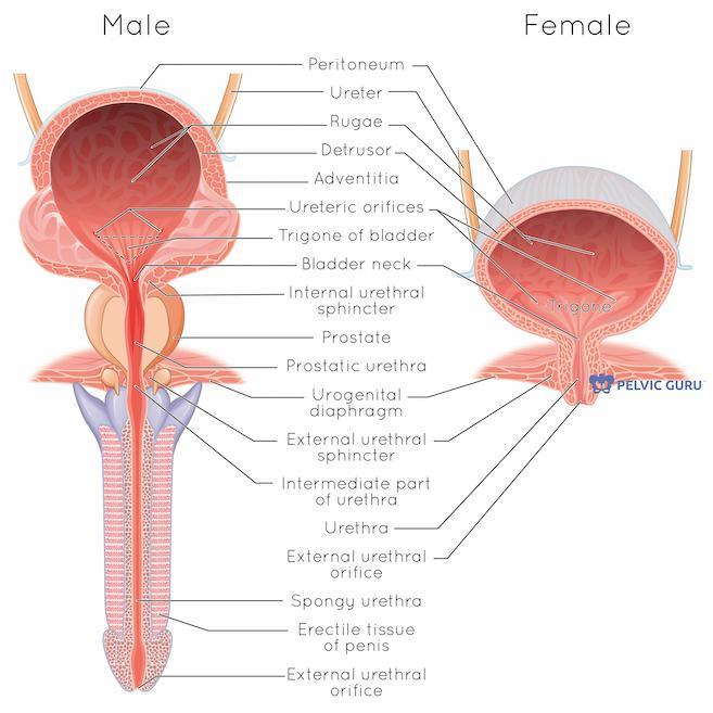 Pelvic Floor PT for Interstitial Cystitis